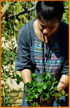 Planting girl B